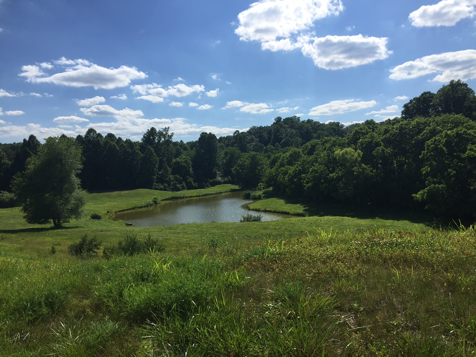 Beautiful Rolling Acreage in Bedford County with Pond