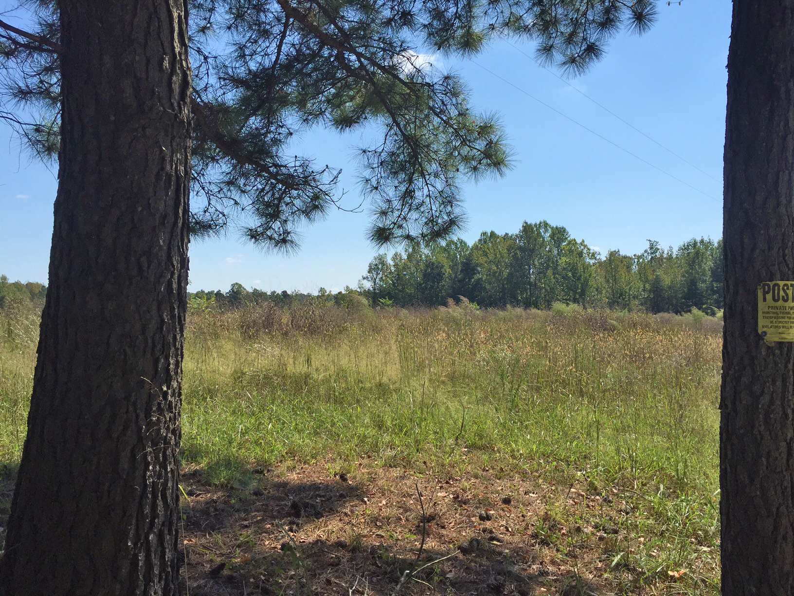 Land for Sale in Meherrin, VA – Mountain Creek Rd